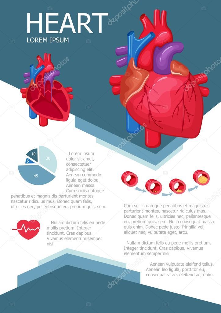 Infografía del corazón humano — Vector de stock © nordfox #113020436