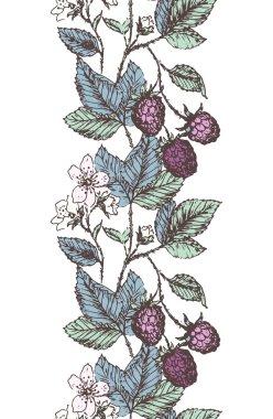 Blackberries border