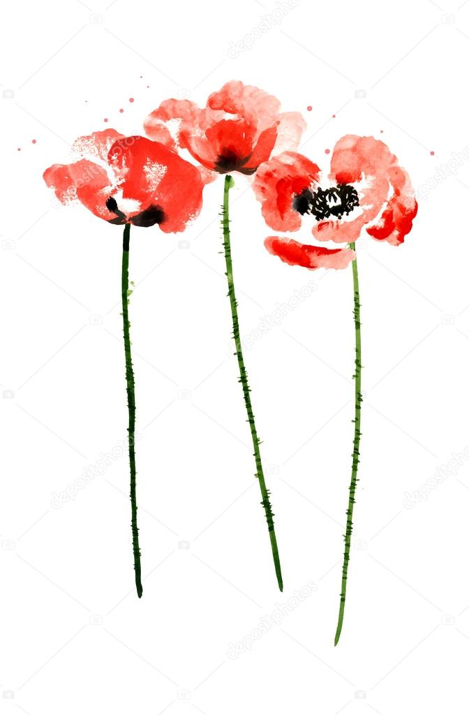 Collection of watercolor poppy flowers — Stock Vector © jetFoto
