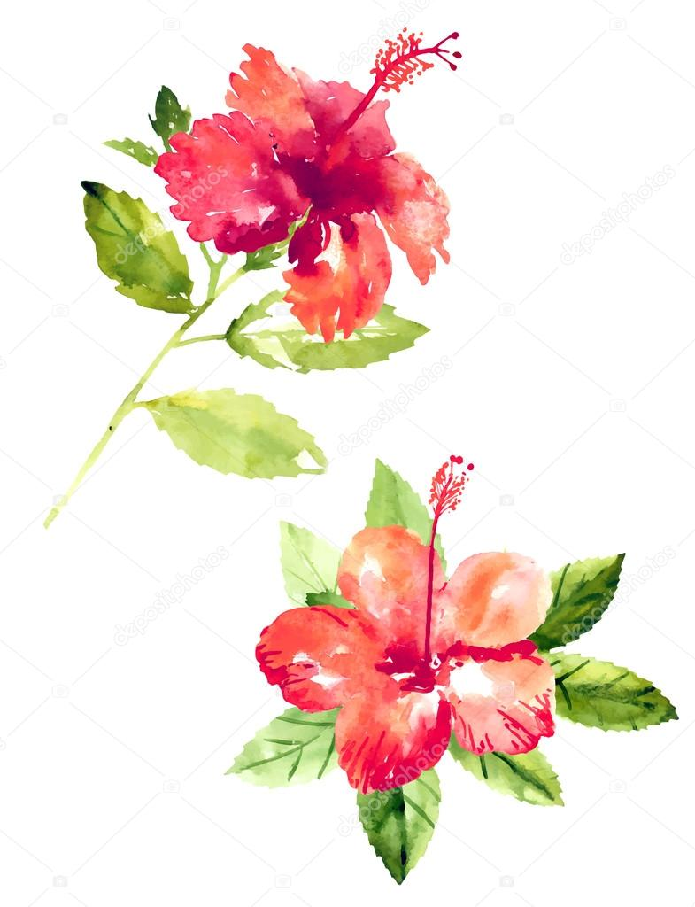 Collection of watercolor hibiscus flowers stock vector jetfoto collection of watercolor hibiscus flowers stock vector izmirmasajfo