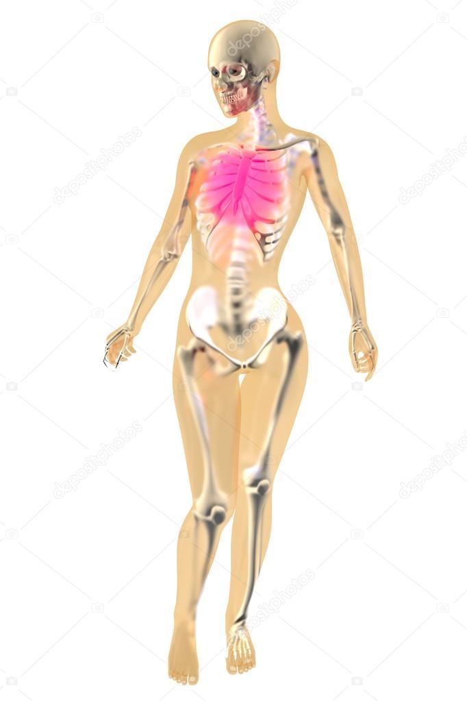 Anatomía femenina - dolor en el pecho — Foto de stock © Spectral ...