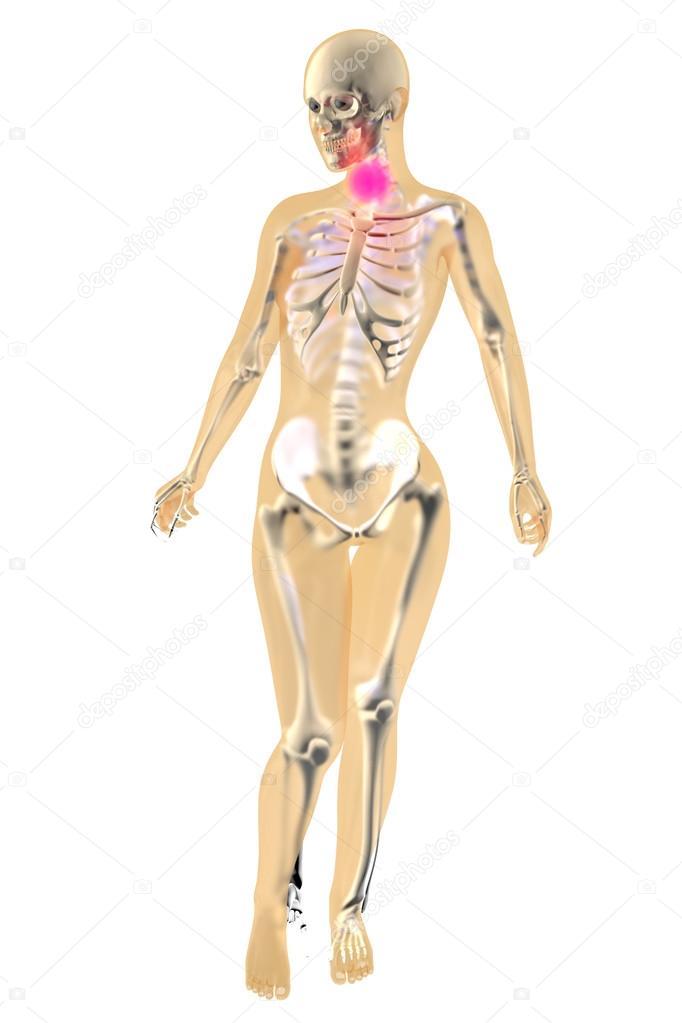 Weibliche Anatomie - Hals-Schmerzen — Stockfoto © Spectral #64549383