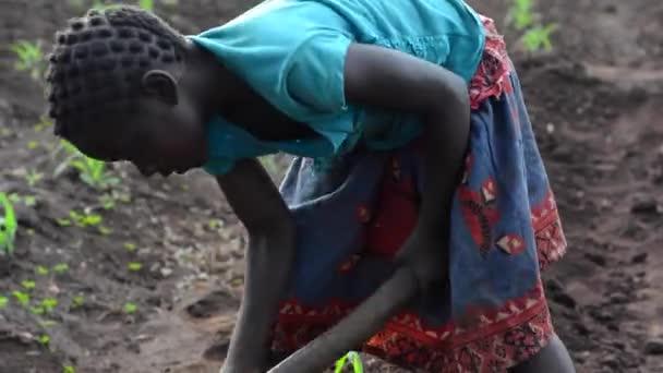Unbekanntes Mädchen arbeitet auf einer Farm in Dedza, Malawi, 19. Dezember 2020