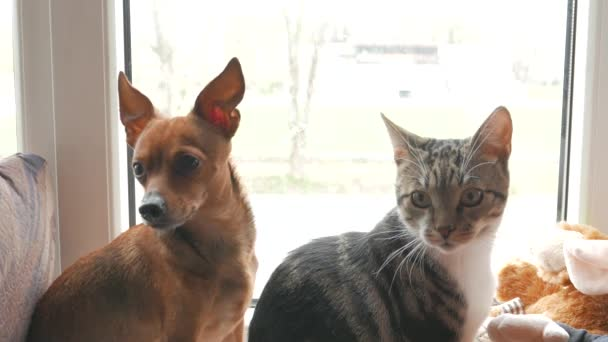 Kočka a pes hrát doma. Seděli u okna. 4k Uhd
