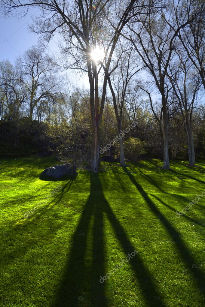 Trees Sunlight Shadows Park Green Grass