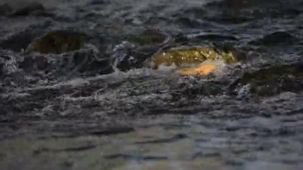 Křesťanská proud vody tekoucí přes řeky Rock