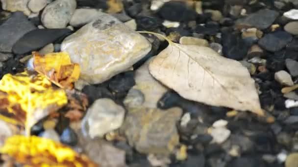 Podzimní listí v vlnky Video