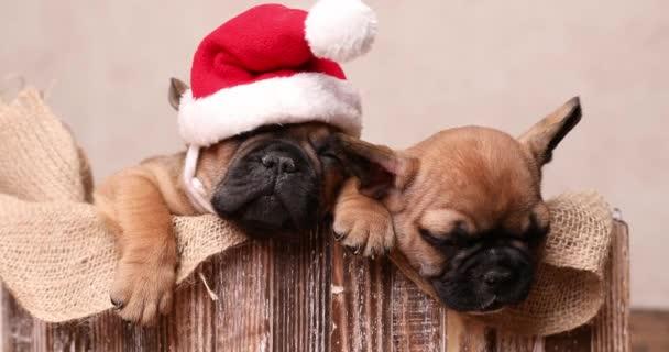 Kleine französische Babys verbringen Weihnachten zusammen und schlafen in einer Holzkiste, die mit Klettverschluss bedeckt ist