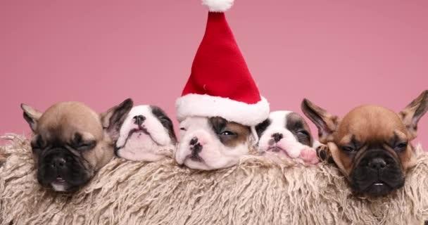 extrem süße französische Bulldoggen-Welpen mit Nikolausmütze, die sich ausruhen und in einer pelzigen Vintage-Box schlafen