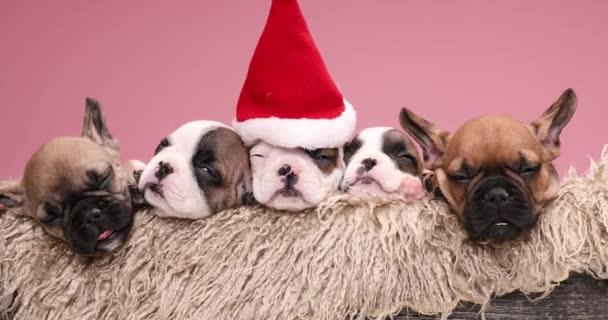 Weihnachtliche französische Bulldoggen-Welpen mit Nikolausmütze, die sich an einem gemütlichen Ort ausruhen und gemeinsam Weihnachten in einer pelzigen Holzkiste feiern