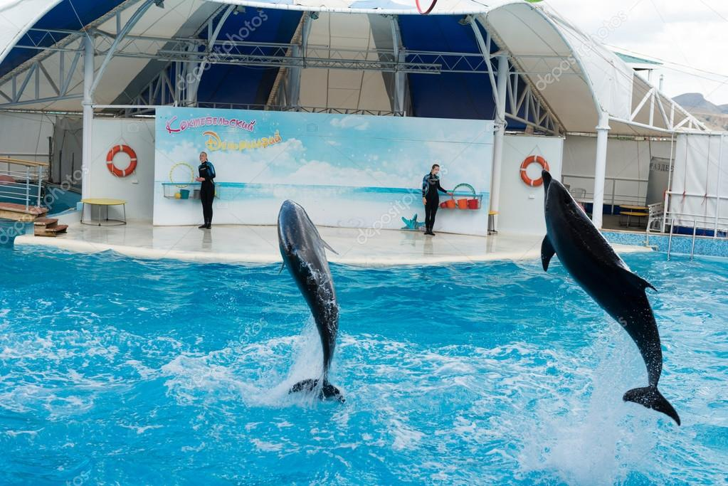 Dolphin show scene