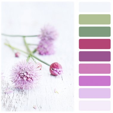 Fresh Chives and Color Palette