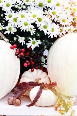 White Chrysanthemums and Pumpkins