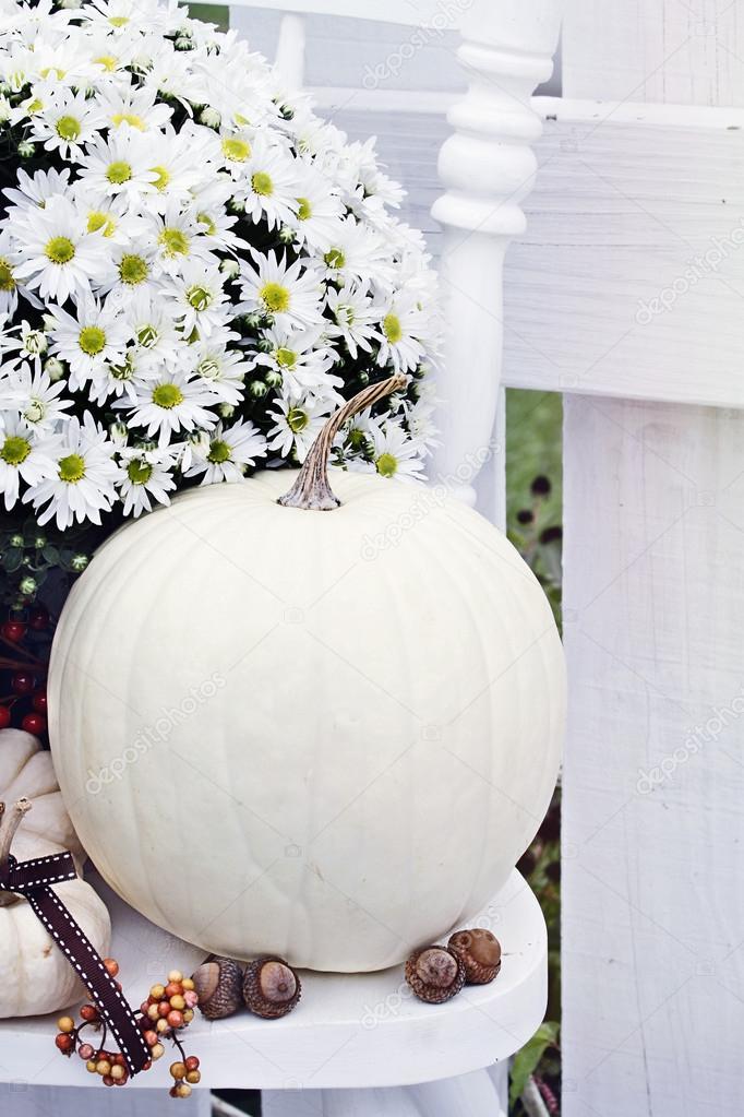 White Pumpkins and Chrysanthemums