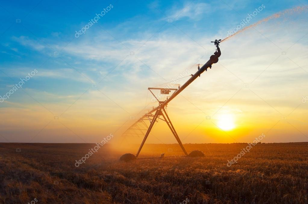 Irrigation pivot on wheat field at summer sunrise