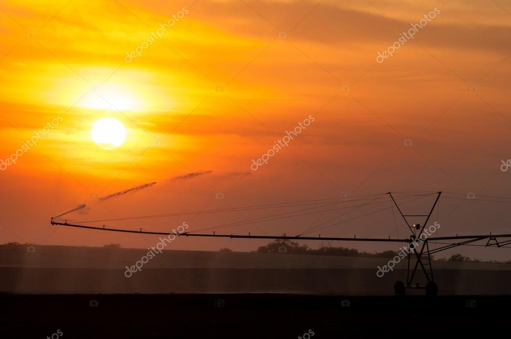 Irrigation system watering wheat fields at summer sunset while sun shines through clouds