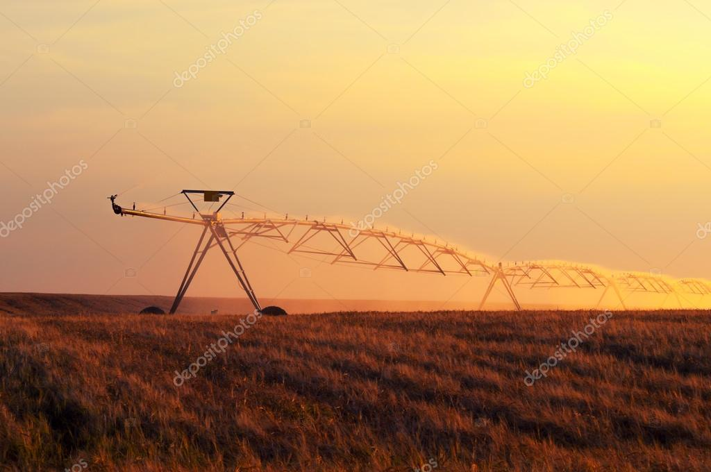 Irrigation system watering wheat field on sunny summer day