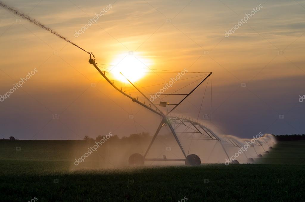 Irrigation system on the field of green beans at sunset on beautiful summer day