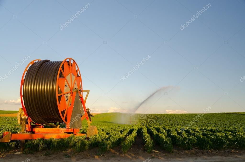 Agricultural irrigation system watering field of paprika on sunny summer day