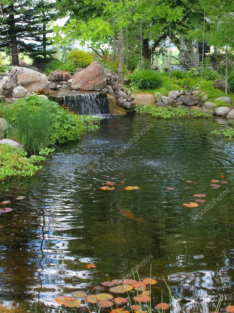 Estanque koi peque o un peque o estanque con for Plantas para estanque peces koi