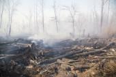 Vliv lesních požárů