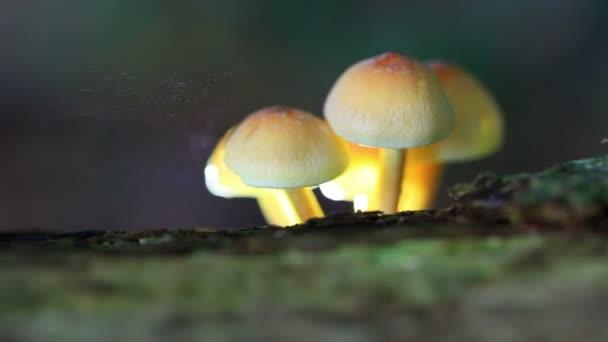 Streunende Pilzsporen