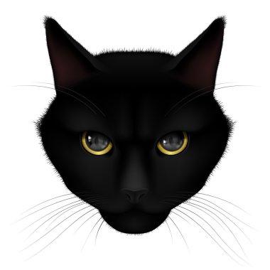 Head of black cat