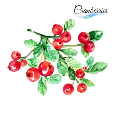 Watercolor fruits cranberries