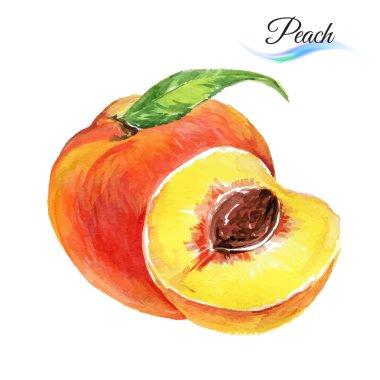 Watercolor peach on white