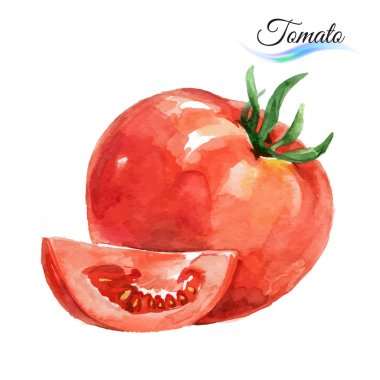 Watercolor tomato on white