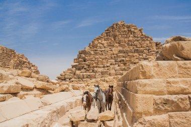 Camel and Giza Pyramids