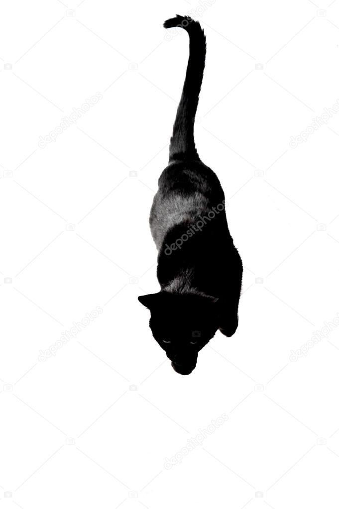 Téléchargement gratuit de la chatte noire avaler squirt porno