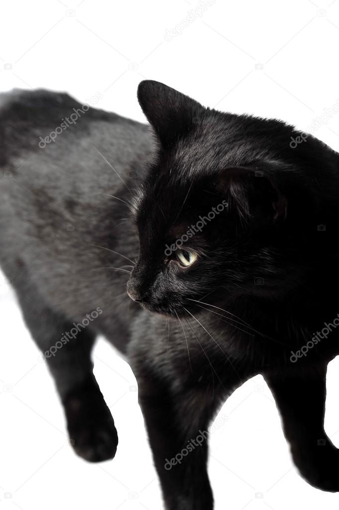 Mooie zwarte poesje Fotos