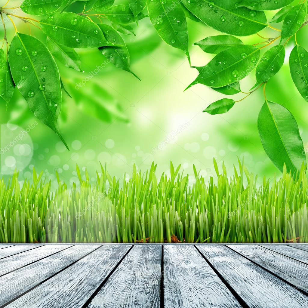 fond nature printemps avec de l 39 herbe photographie merznatalia 53887259. Black Bedroom Furniture Sets. Home Design Ideas