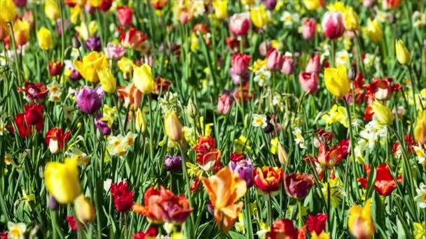 Virágok nyugodt enyhe szél uralkodik