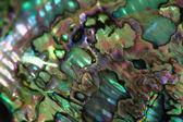 Fotografie Luxus-Perle Textur