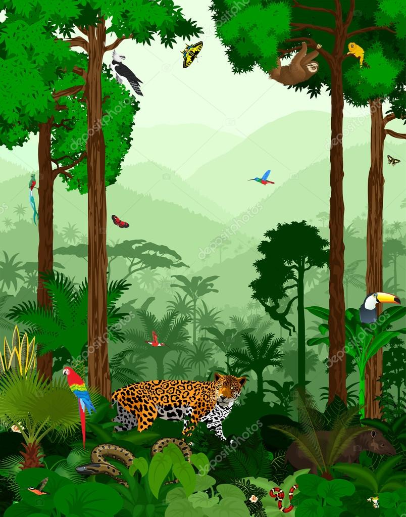 Vector Jungle Rainforest with animals