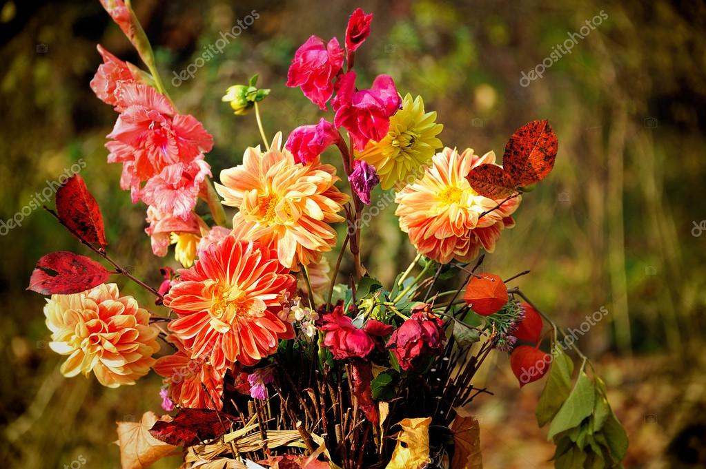 Bouquet di fiori autunnali foto stock natlit 64785607 for Immagini fiori autunnali