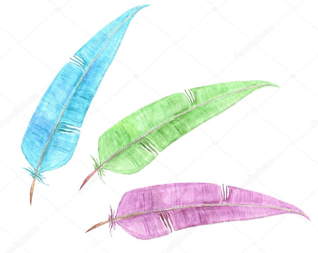 Trois Coloris Plumes Aquarelle Dessin Photographie