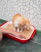 Fotografie Katze in die Toilette