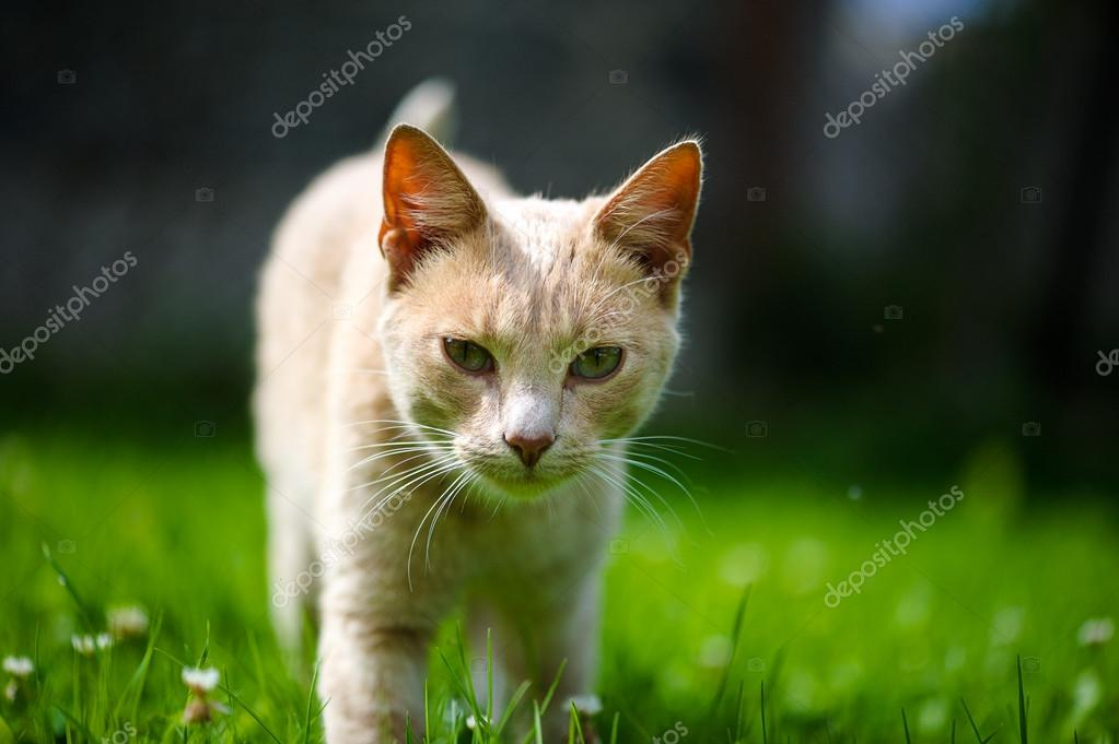 Funny adorable cat