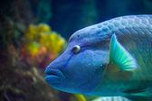 Mořské ryby plavání