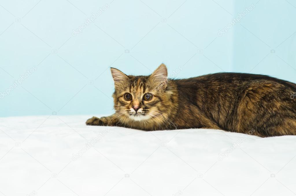 Cat on mattress with shallo DOF