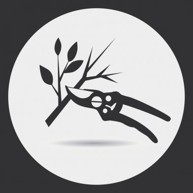 Pruning dry branches