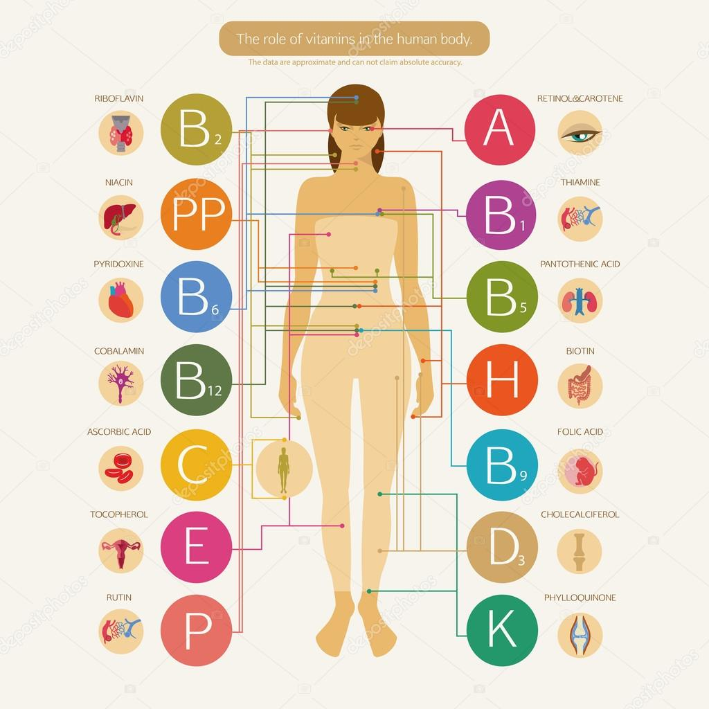the sources and uses of minerals in the human body