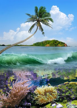 Beautiful island with palm trees