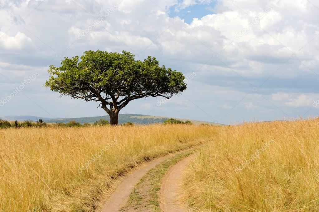 köpa träd i afrika