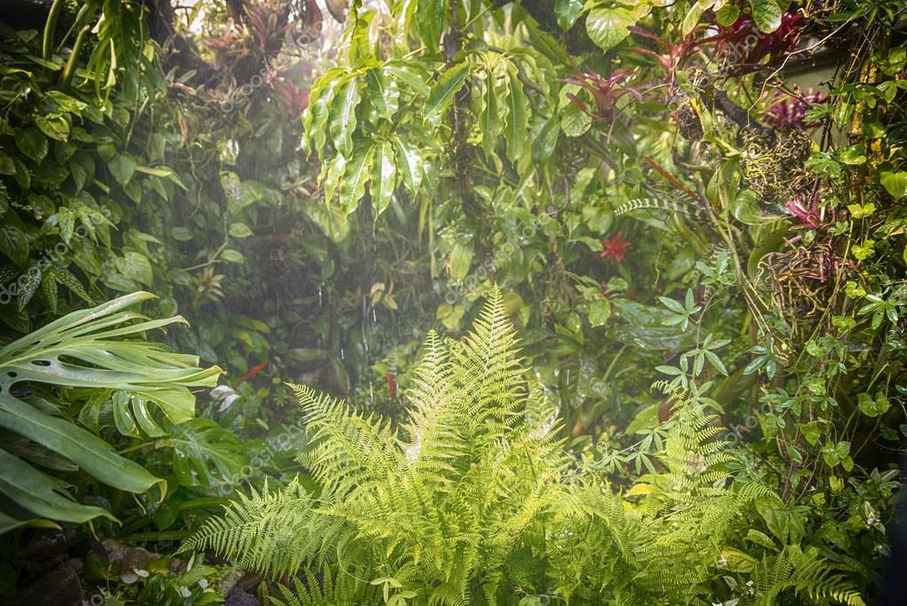 rain in forest jungle