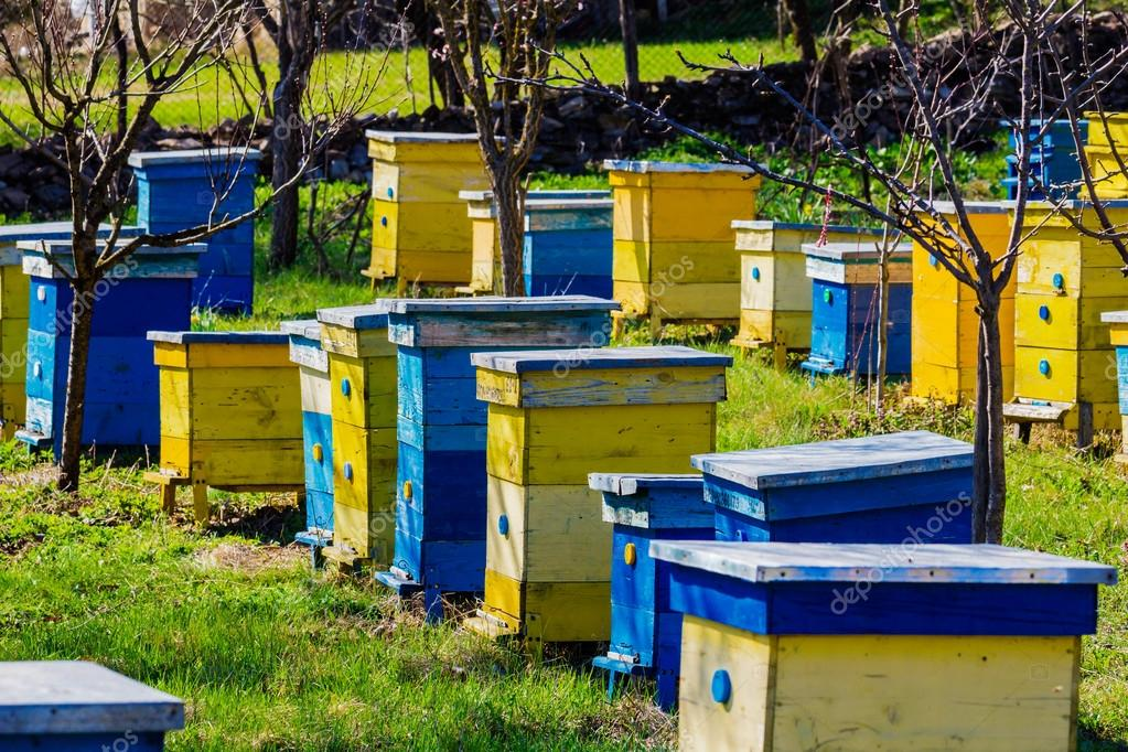 Blue and yellow beehives in garden
