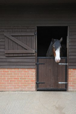Heavy shire horse looking out over stable door